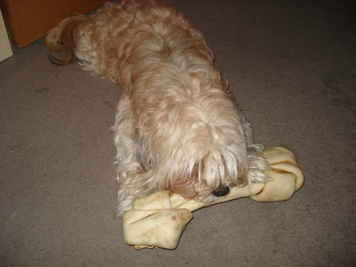 dewey-with-oversided-bone.jpg